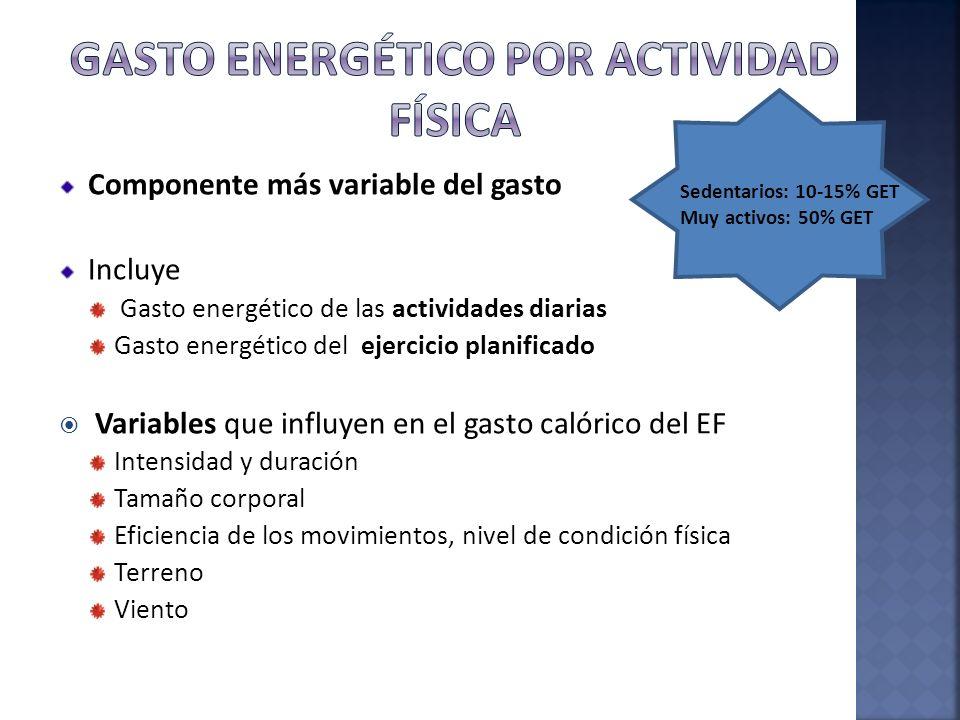 Componente más variable del gasto Incluye Gasto energético de las actividades diarias Gasto energético del ejercicio planificado Variables que influye
