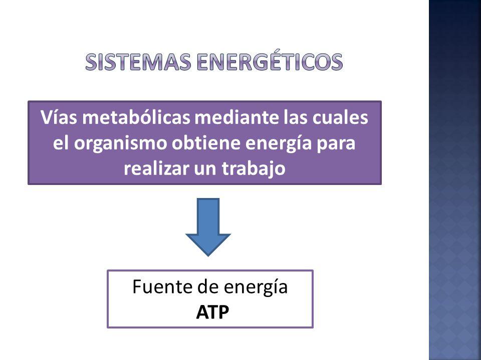 Fosfágenos Anaeróbico Aláctico Fosfocreatina-ATP Anaeróbico Láctico Glucolítico Aeróbico Oxidativo Siempre están en presentes los 3 sistemas, pero predomina uno
