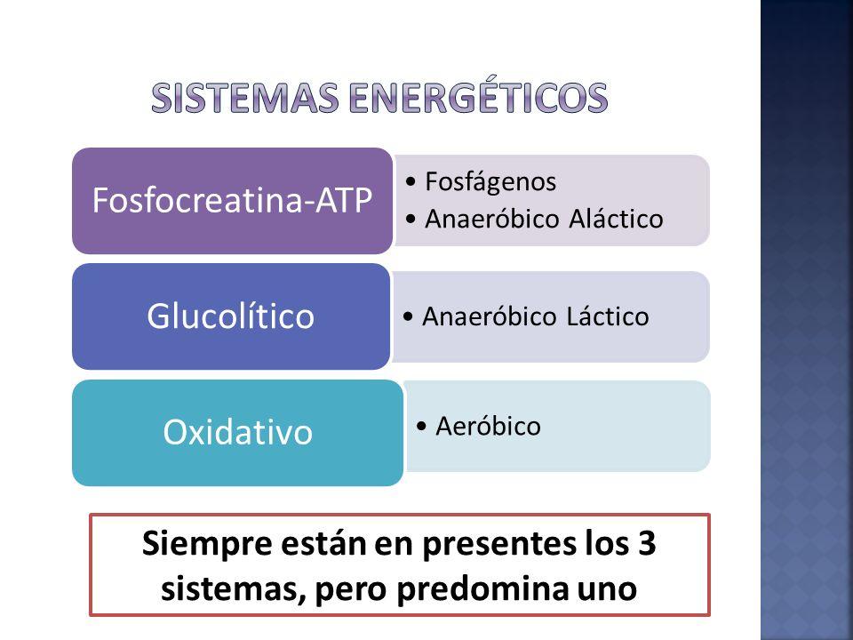Fosfágenos Anaeróbico Aláctico Fosfocreatina-ATP Anaeróbico Láctico Glucolítico Aeróbico Oxidativo Siempre están en presentes los 3 sistemas, pero pre