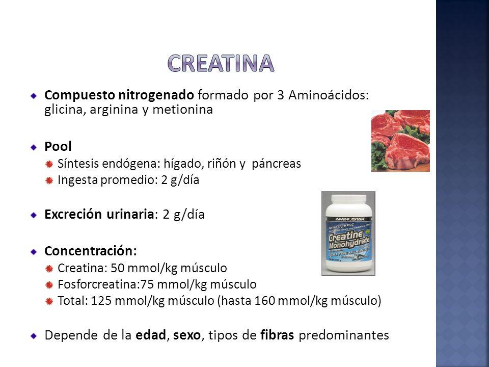 Compuesto nitrogenado formado por 3 Aminoácidos: glicina, arginina y metionina Pool Síntesis endógena: hígado, riñón y páncreas Ingesta promedio: 2 g/