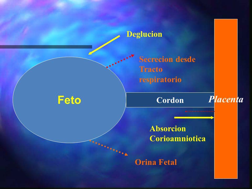 Anemia severa HipoproteinemiaHidropesia fetal ¿Cómo Prevenirlo??