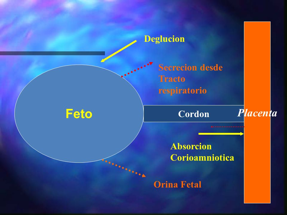 Liquido amniotico: Fisiologia n Volumen Normal n Hidramnios n Oligohidramnios