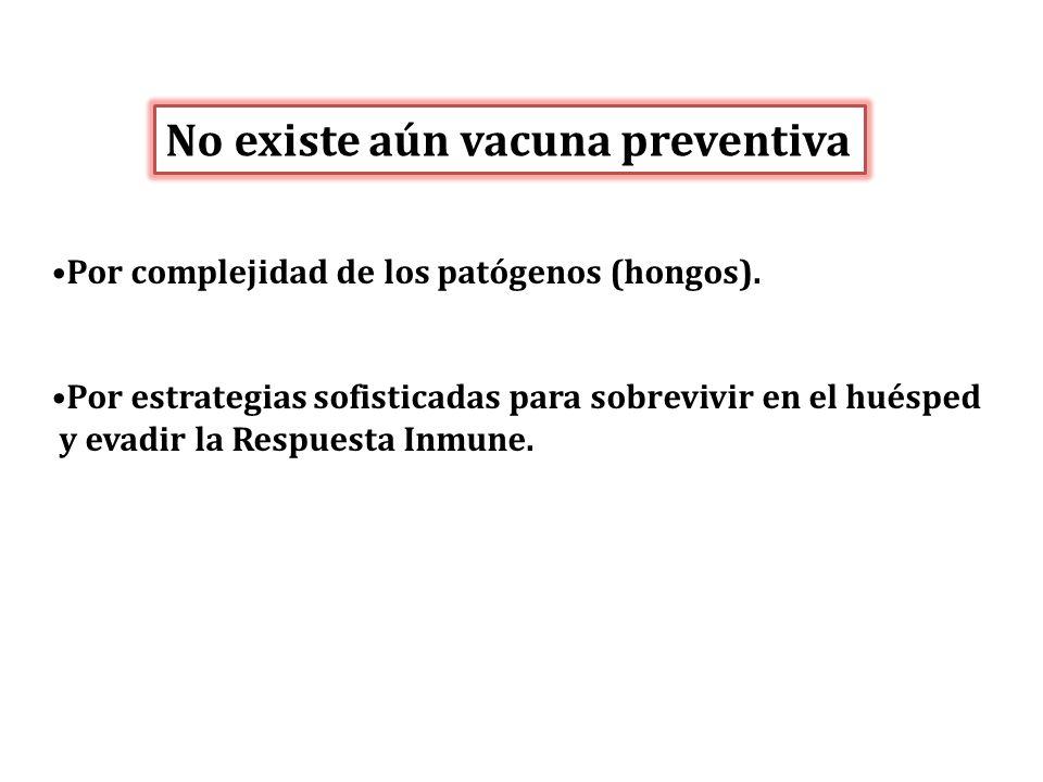 No existe aún vacuna preventiva Por complejidad de los patógenos (hongos). Por estrategias sofisticadas para sobrevivir en el huésped y evadir la Resp