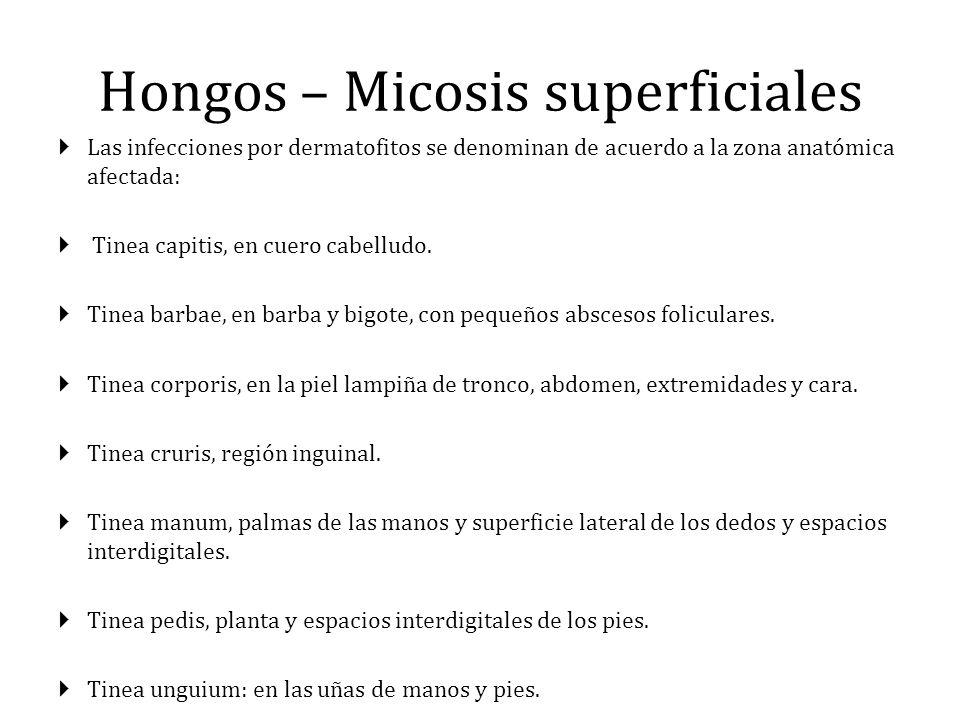 Hongos – Micosis superficiales Las infecciones por dermatofitos se denominan de acuerdo a la zona anatómica afectada: Tinea capitis, en cuero cabellud