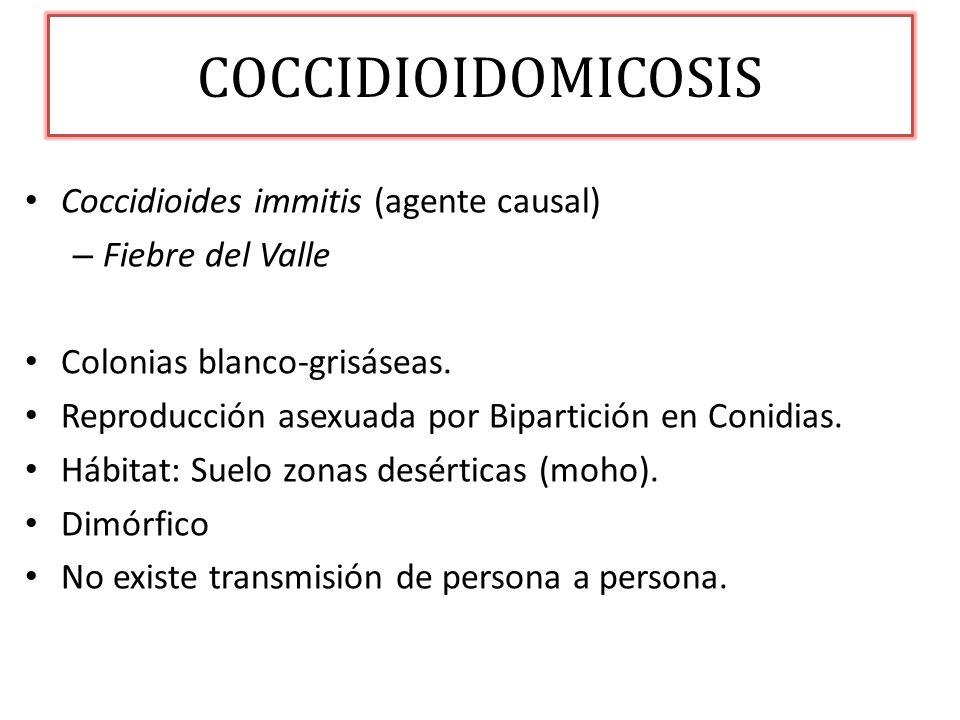COCCIDIOIDOMICOSIS Coccidioides immitis (agente causal) – Fiebre del Valle Colonias blanco-grisáseas. Reproducción asexuada por Bipartición en Conidia