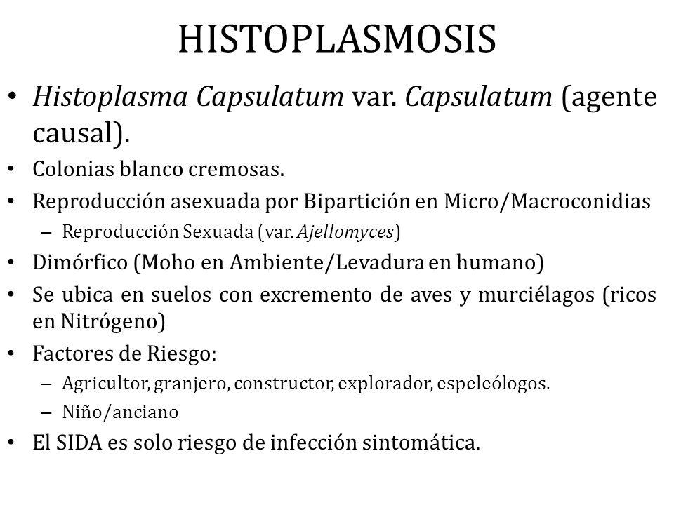 HISTOPLASMOSIS Histoplasma Capsulatum var. Capsulatum (agente causal). Colonias blanco cremosas. Reproducción asexuada por Bipartición en Micro/Macroc