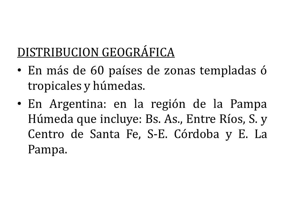 DISTRIBUCION GEOGRÁFICA En más de 60 países de zonas templadas ó tropicales y húmedas. En Argentina: en la región de la Pampa Húmeda que incluye: Bs.