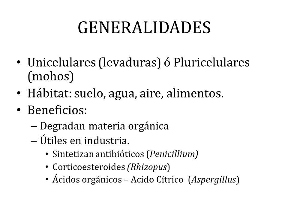 GENERALIDADES Unicelulares (levaduras) ó Pluricelulares (mohos) Hábitat: suelo, agua, aire, alimentos. Beneficios: – Degradan materia orgánica – Útile