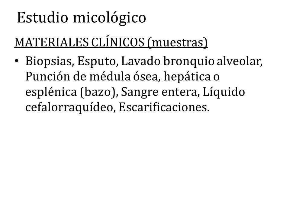 Estudio micológico MATERIALES CLÍNICOS (muestras) Biopsias, Esputo, Lavado bronquio alveolar, Punción de médula ósea, hepática o esplénica (bazo), San