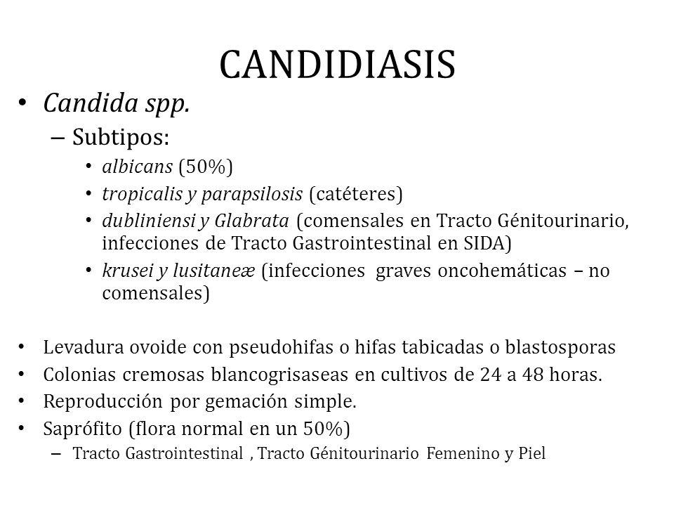 CANDIDIASIS Candida spp. – Subtipos: albicans (50%) tropicalis y parapsilosis (catéteres) dubliniensi y Glabrata (comensales en Tracto Génitourinario,