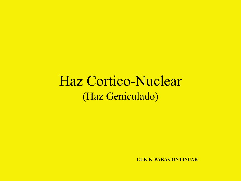 Haz Cortico-Nuclear (Haz Geniculado) CLICK PARA CONTINUAR