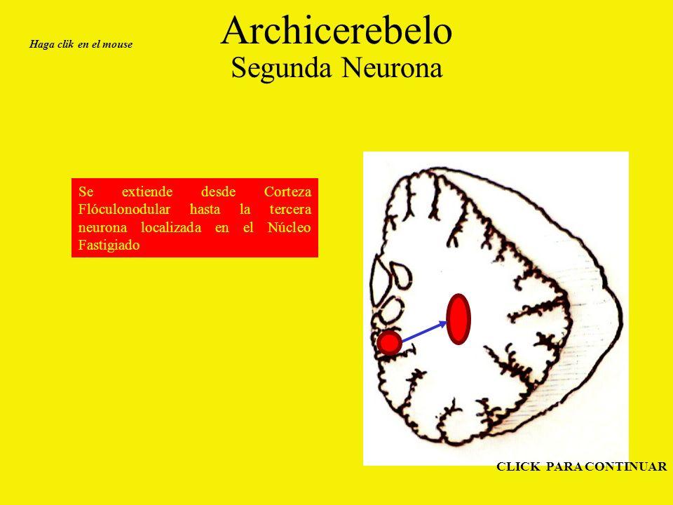 Archicerebelo Segunda Neurona Se extiende desde Corteza Flóculonodular hasta la tercera neurona localizada en el Núcleo Fastigiado Haga clik en el mouse CLICK PARA CONTINUAR