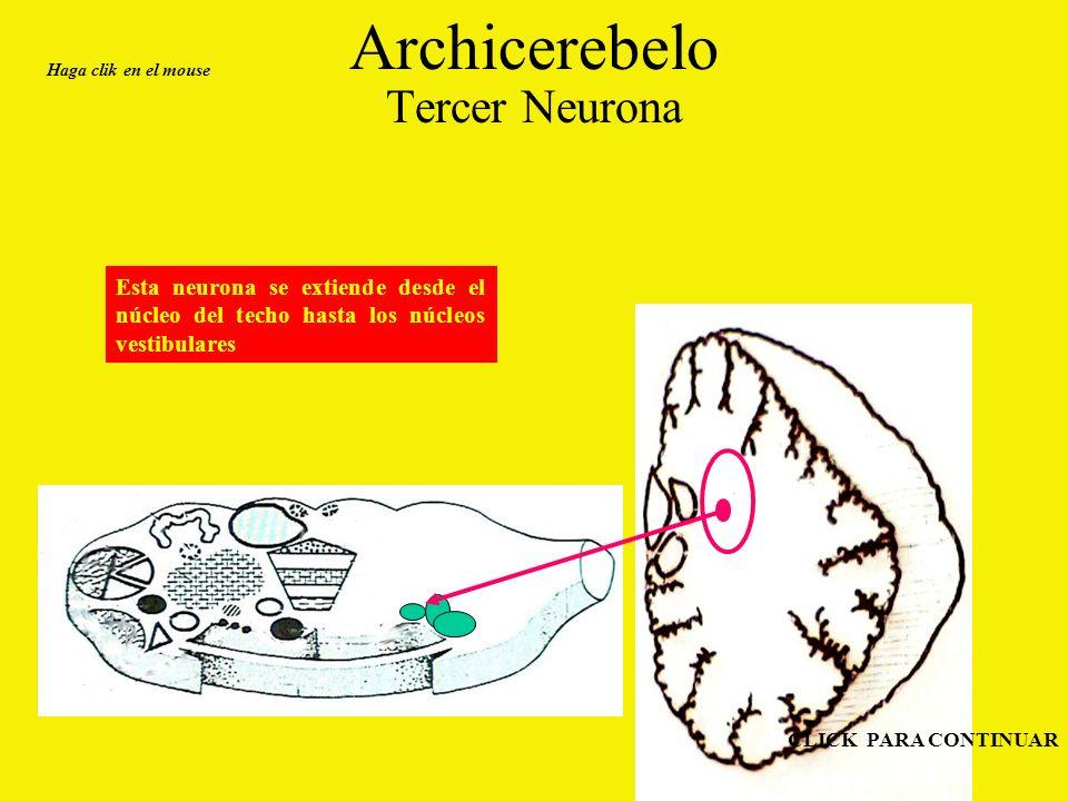 Archicerebelo Tercer Neurona Esta neurona se extiende desde el núcleo del techo hasta los núcleos vestibulares Haga clik en el mouse CLICK PARA CONTINUAR