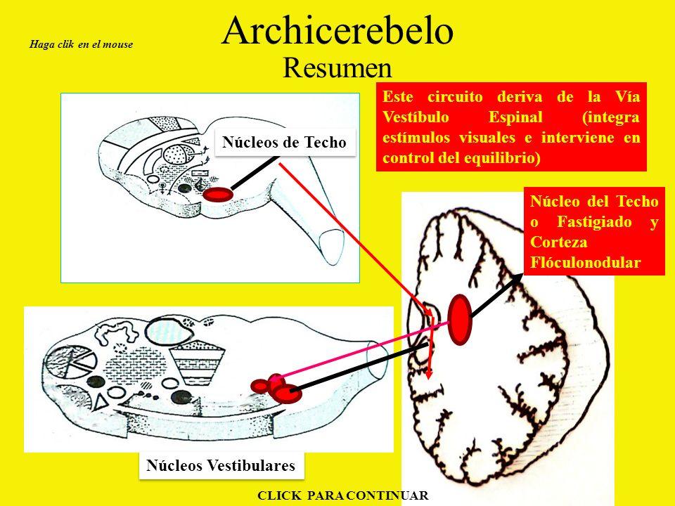 Archicerebelo Resumen Este circuito deriva de la Vía Vestíbulo Espinal (integra estímulos visuales e interviene en control del equilibrio) Haga clik en el mouse CLICK PARA CONTINUAR Núcleos Vestibulares Núcleos de Techo Núcleo del Techo o Fastigiado y Corteza Flóculonodular