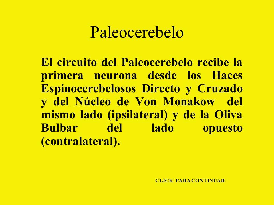 Paleocerebelo El circuito del Paleocerebelo recibe la primera neurona desde los Haces Espinocerebelosos Directo y Cruzado y del Núcleo de Von Monakow del mismo lado (ipsilateral) y de la Oliva Bulbar del lado opuesto (contralateral).