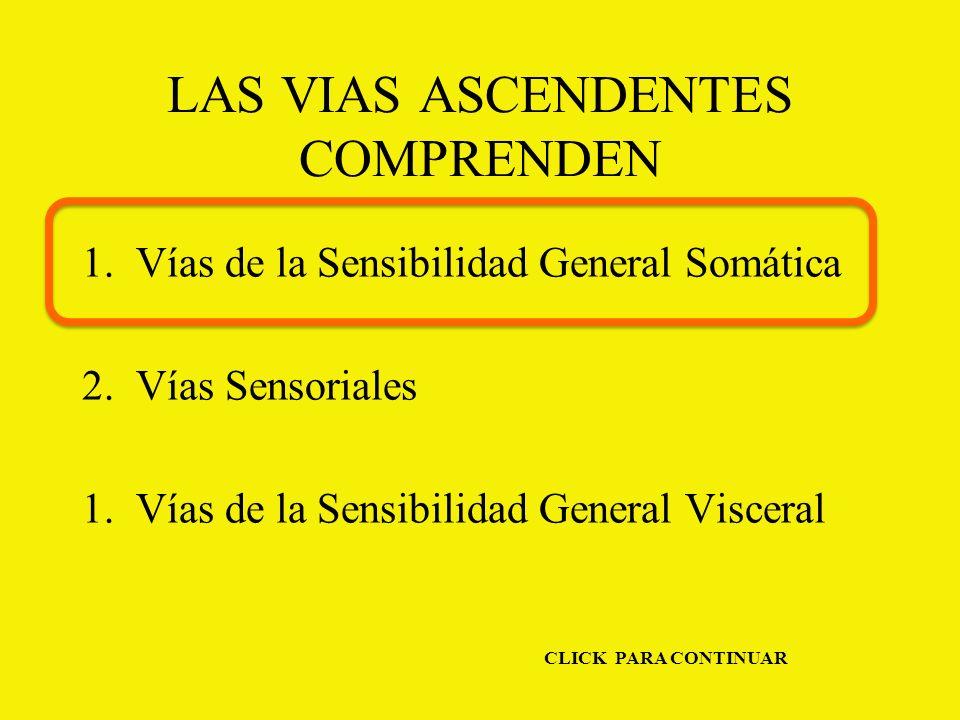 LAS VIAS ASCENDENTES COMPRENDEN 1.Vías de la Sensibilidad General Somática 2.Vías Sensoriales 1.Vías de la Sensibilidad General Visceral CLICK PARA CONTINUAR