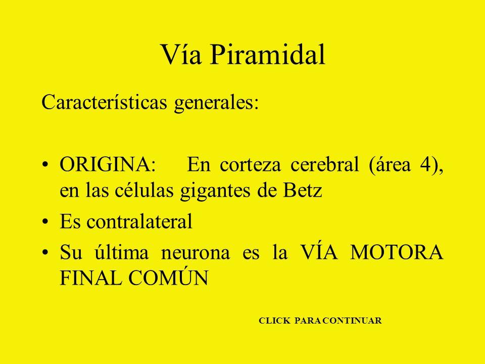 Vía Piramidal Características generales: ORIGINA: En corteza cerebral (área 4), en las células gigantes de Betz Es contralateral Su última neurona es la VÍA MOTORA FINAL COMÚN CLICK PARA CONTINUAR