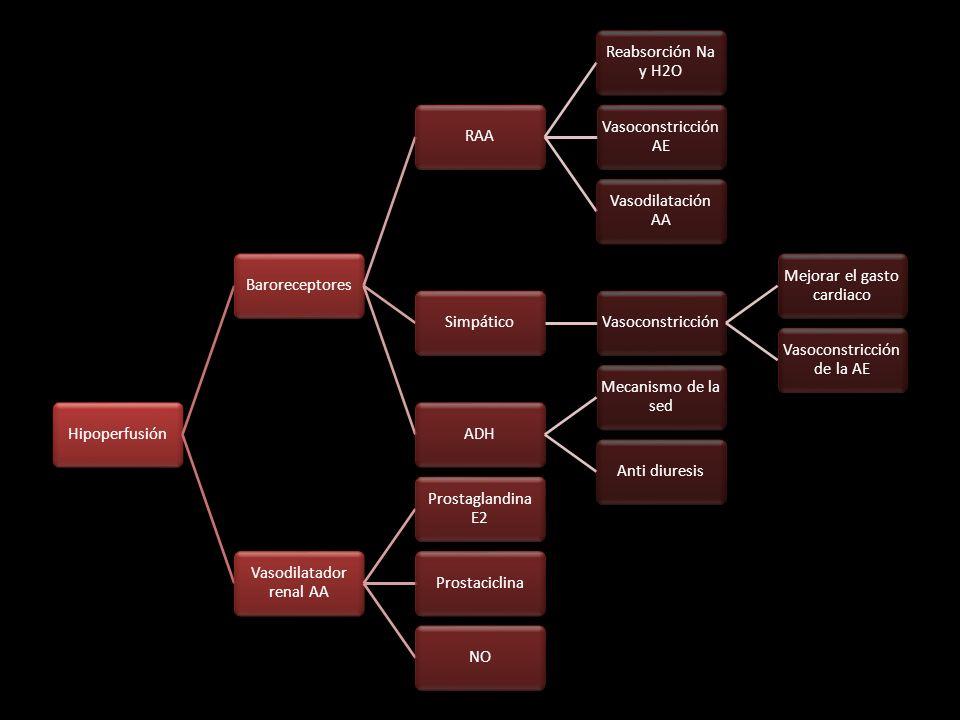 Hipoperfusión BaroreceptoresRAA Reabsorción Na y H2O Vasoconstricción AE Vasodilatación AA SimpáticoVasoconstricción Mejorar el gasto cardiaco Vasocon