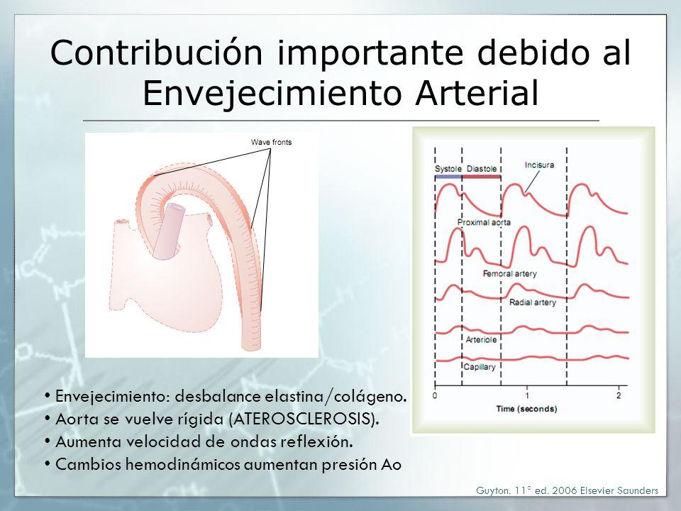Contribución importante debido al Envejecimiento Arterial Guyton. 11° ed. 2006 Elsevier Saunders Envejecimiento: desbalance elastina/colágeno. Aorta s