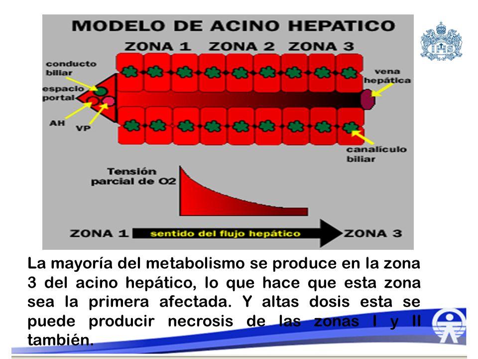 La mayoría del metabolismo se produce en la zona 3 del acino hepático, lo que hace que esta zona sea la primera afectada. Y altas dosis esta se puede