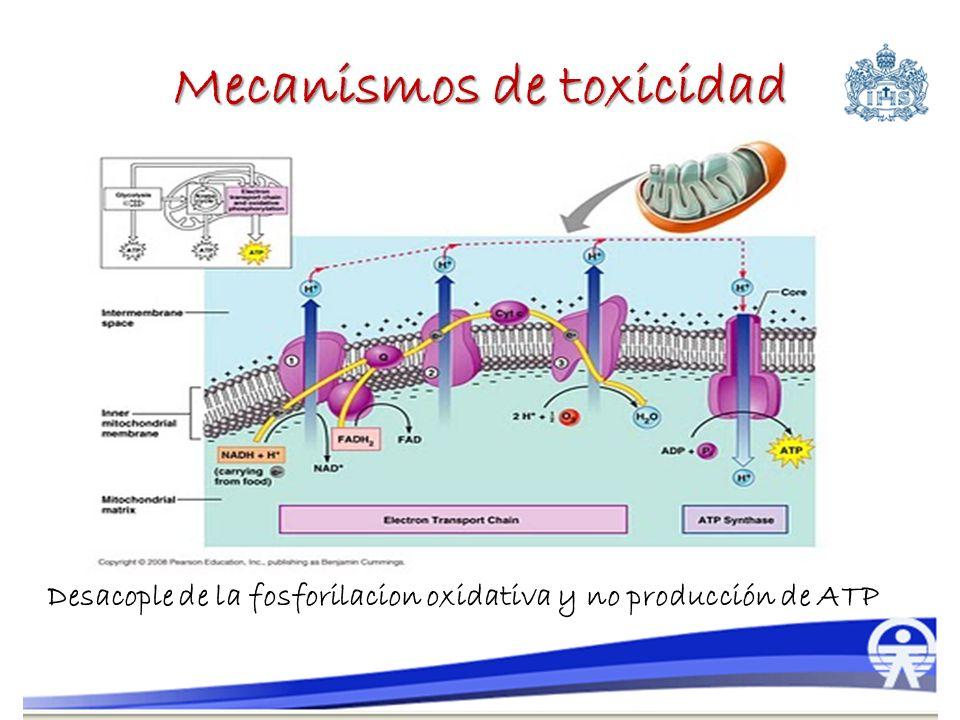Mecanismos de toxicidad Desacople de la fosforilacion oxidativa y no producción de ATP