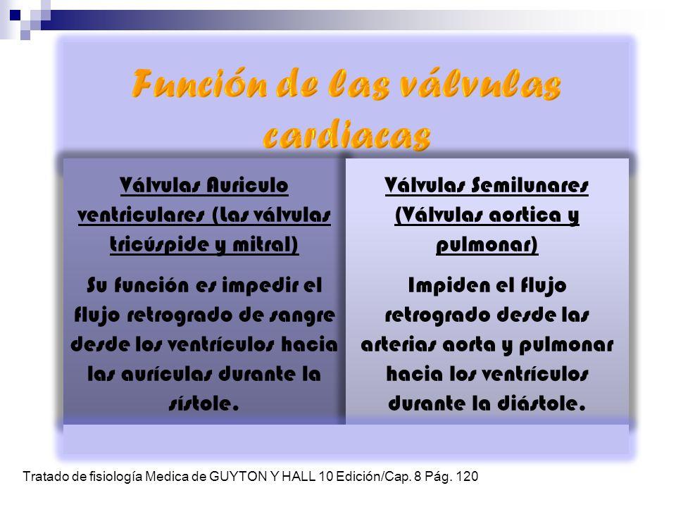 Válvulas Auriculo ventriculares (Las válvulas tricúspide y mitral) Su función es impedir el flujo retrogrado de sangre desde los ventrículos hacia las