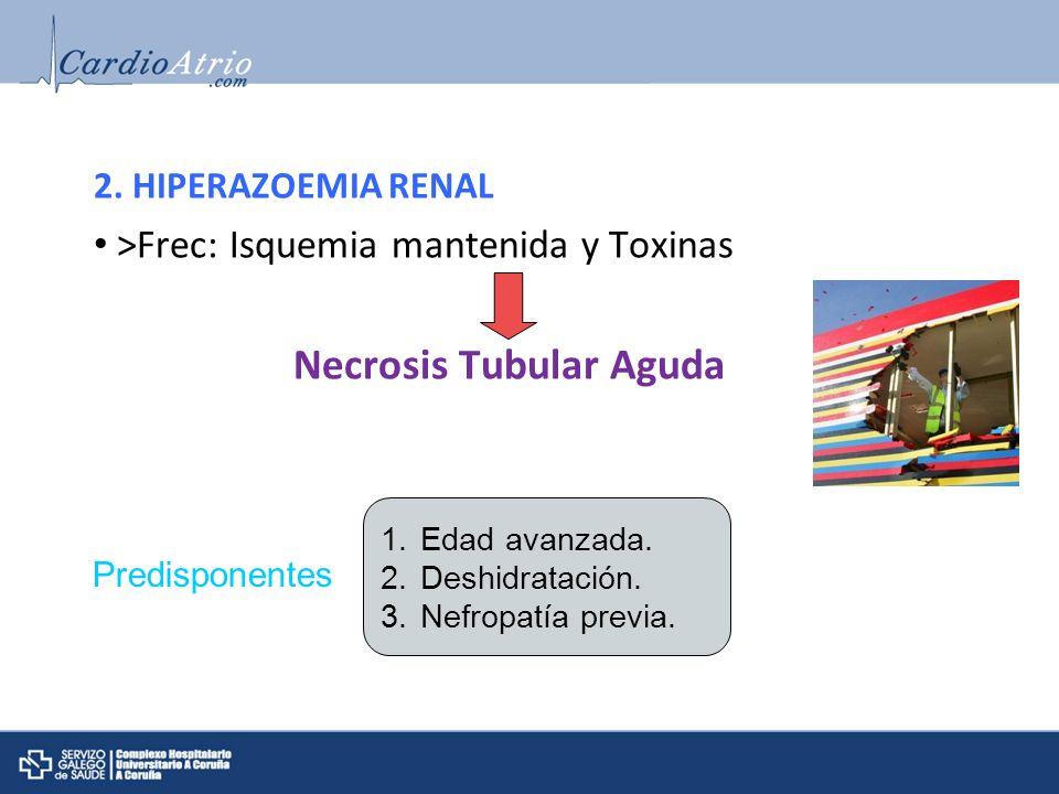 2. HIPERAZOEMIA RENAL >Frec: Isquemia mantenida y Toxinas Necrosis Tubular Aguda Predisponentes 1.Edad avanzada. 2.Deshidratación. 3.Nefropatía previa