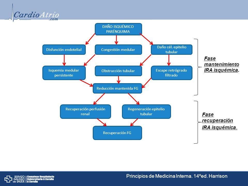 Regeneración epitelio tubular DAÑO ISQUÉMICO PARÉNQUIMA Congestión medular Recuperación perfusión renal Obstrucción tubular Reducción mantenida FG Rec