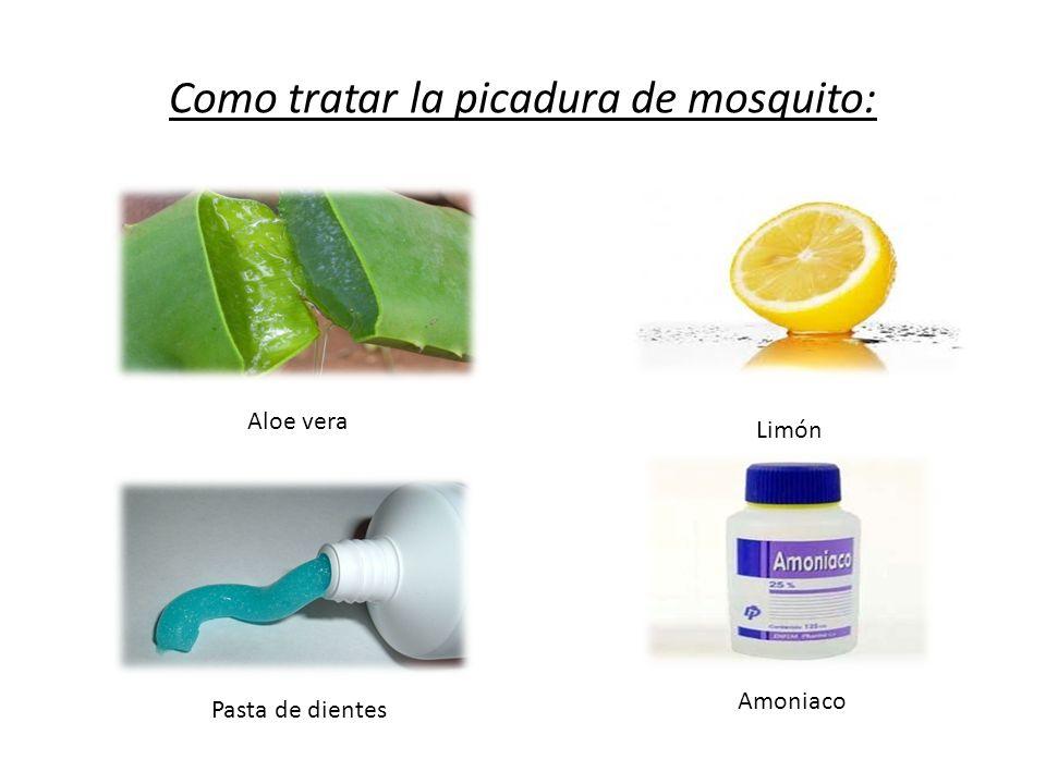 Como tratar la picadura de mosquito: Aloe vera Limón Pasta de dientes Amoniaco