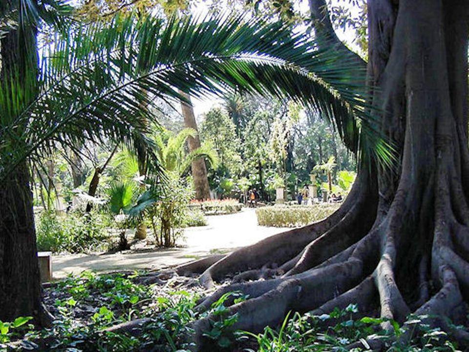 Monte Gurugú Es una pequeña elevación de unas decenas de metros terminada en cúpula a la que se accede por una escalera pedregosa desde la que se divisa gran parte del parque, tiene una cascada de agua que desemboca en un minúsculo estanque, dando todo el grupo una sensación de bosque paradisíaco.