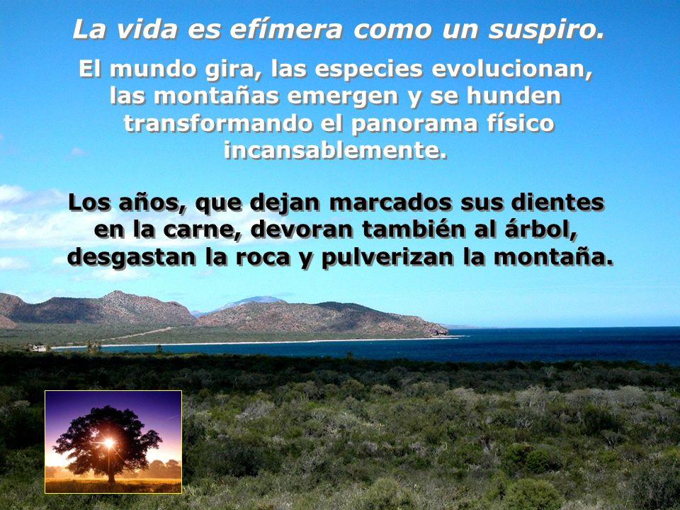 Finalmente, en la gloria de mi embeleso, quedo adormecido en tu regazo y percibo extasiado el grandioso palpitar de la vida eterna Finalmente, en la gloria de mi embeleso, quedo adormecido en tu regazo y percibo extasiado el grandioso palpitar de la vida eterna F I N F I N Una realización de Francisco Arámburo Salas faramburo@aramburosuites.com Una realización de Francisco Arámburo Salas faramburo@aramburosuites.com...y hasta me parece ver ante mí al divino Creador del Universo.