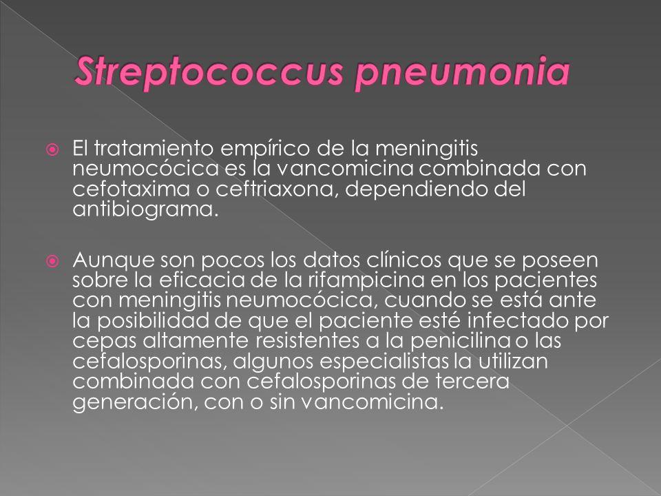 El tratamiento empírico de la meningitis neumocócica es la vancomicina combinada con cefotaxima o ceftriaxona, dependiendo del antibiograma. Aunque so