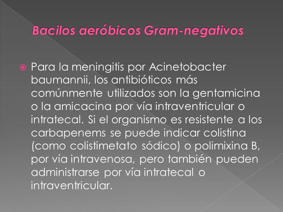 Para la meningitis por Acinetobacter baumannii, los antibióticos más comúnmente utilizados son la gentamicina o la amicacina por vía intraventricular