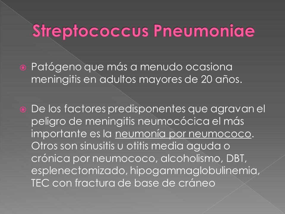 Patógeno que más a menudo ocasiona meningitis en adultos mayores de 20 años. De los factores predisponentes que agravan el peligro de meningitis neumo