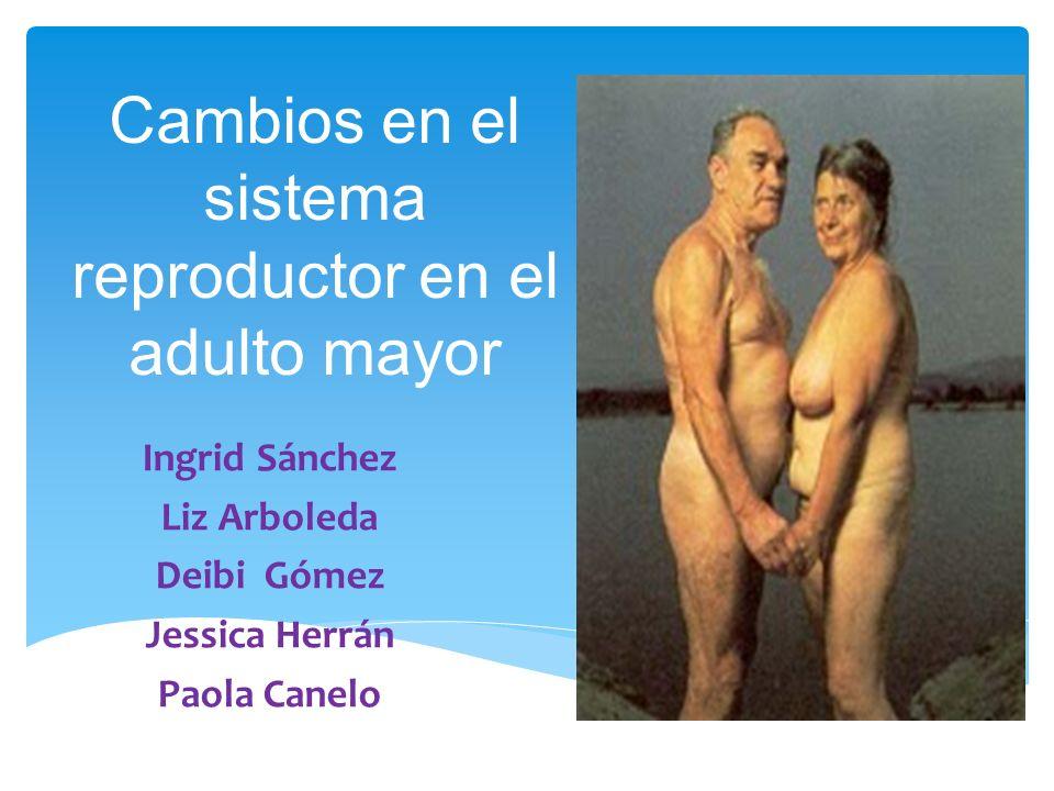 Cambios en el sistema reproductor en el adulto mayor Ingrid Sánchez Liz Arboleda Deibi Gómez Jessica Herrán Paola Canelo