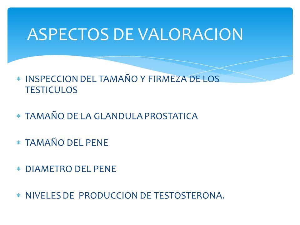 INSPECCION DEL TAMAÑO Y FIRMEZA DE LOS TESTICULOS TAMAÑO DE LA GLANDULA PROSTATICA TAMAÑO DEL PENE DIAMETRO DEL PENE NIVELES DE PRODUCCION DE TESTOSTERONA.