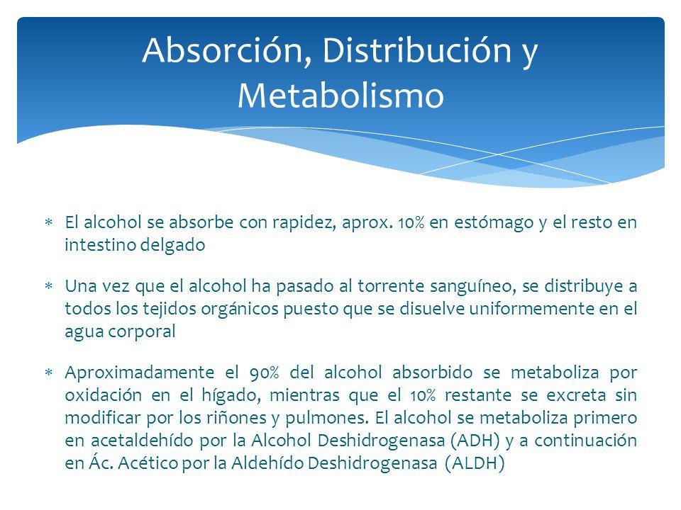 El alcohol se absorbe con rapidez, aprox. 10% en estómago y el resto en intestino delgado Una vez que el alcohol ha pasado al torrente sanguíneo, se d