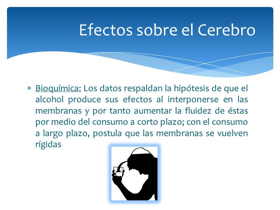 Bioquímica: Los datos respaldan la hipótesis de que el alcohol produce sus efectos al interponerse en las membranas y por tanto aumentar la fluidez de