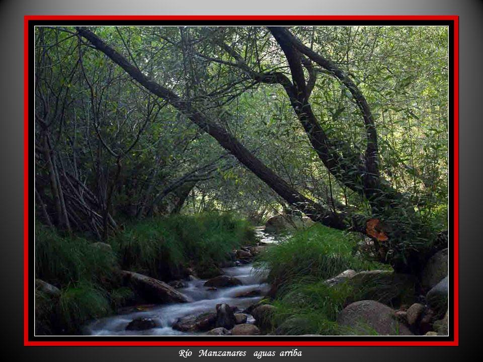 Río Manzanares aguas arriba