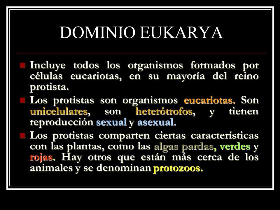 DOMINIO EUKARYA Incluye todos los organismos formados por células eucariotas, en su mayoría del reino protista. Incluye todos los organismos formados