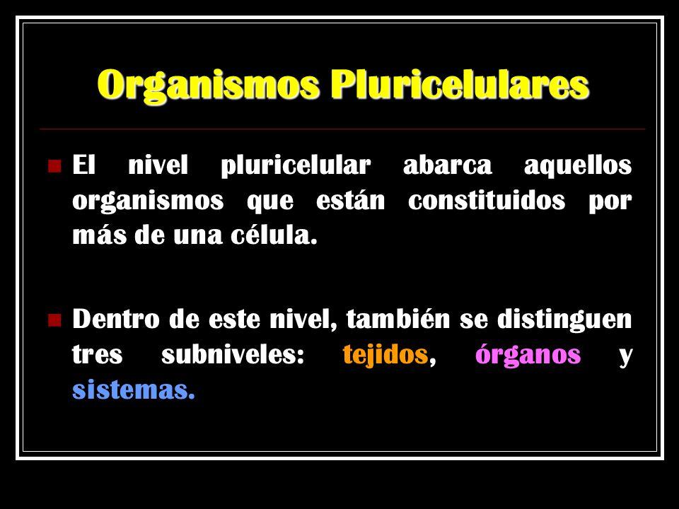 Organismos Pluricelulares El nivel pluricelular abarca aquellos organismos que están constituidos por más de una célula. Dentro de este nivel, también