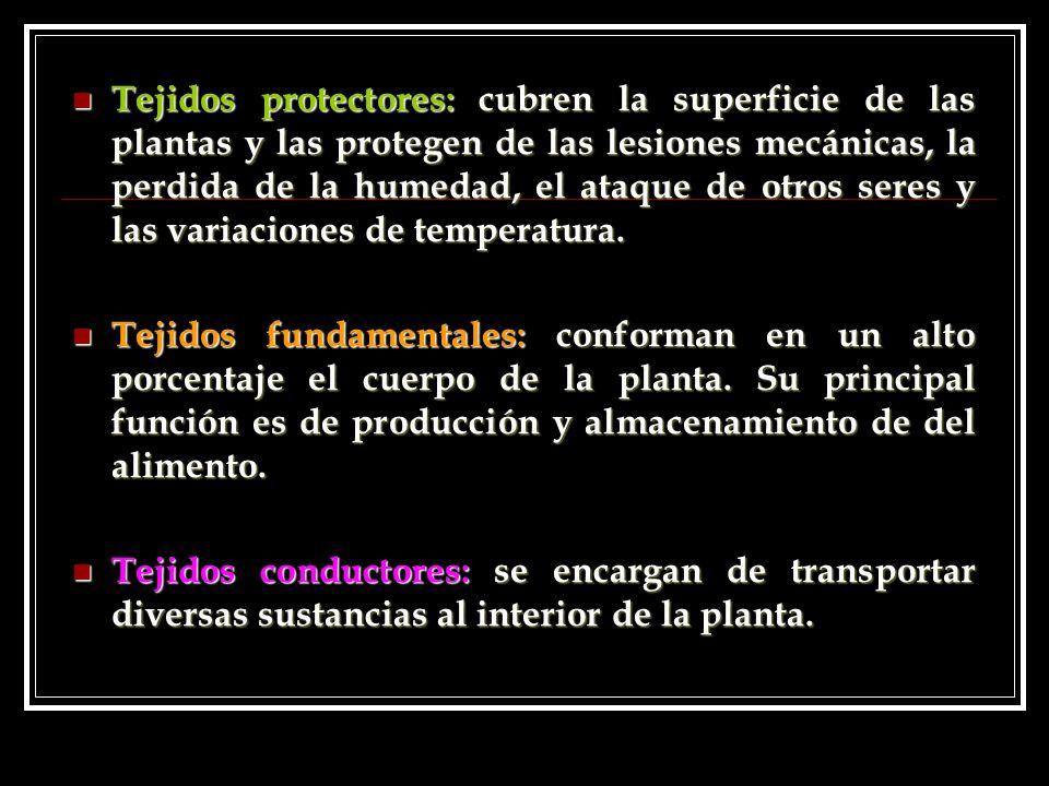 Tejidos protectores: cubren la superficie de las plantas y las protegen de las lesiones mecánicas, la perdida de la humedad, el ataque de otros seres