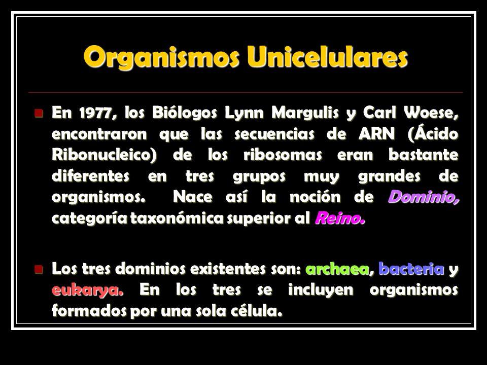 Organismos Unicelulares En 1977, los Biólogos Lynn Margulis y Carl Woese, encontraron que las secuencias de ARN (Ácido Ribonucleico) de los ribosomas eran bastante diferentes en tres grupos muy grandes de organismos.