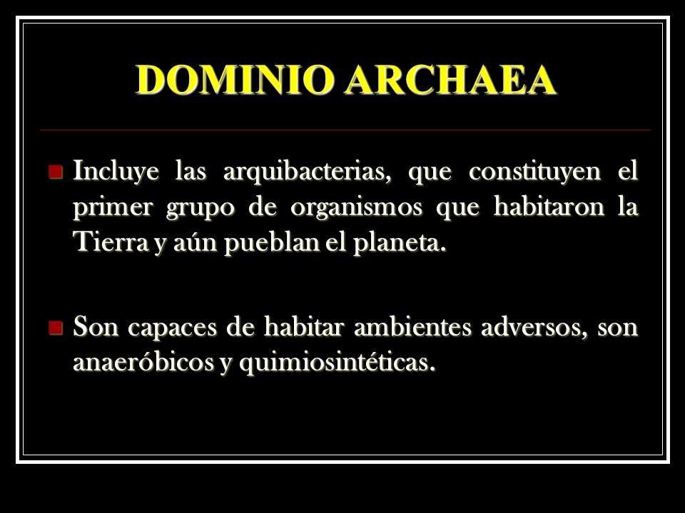 DOMINIO ARCHAEA Incluye las arquibacterias, que constituyen el primer grupo de organismos que habitaron la Tierra y aún pueblan el planeta. Incluye la
