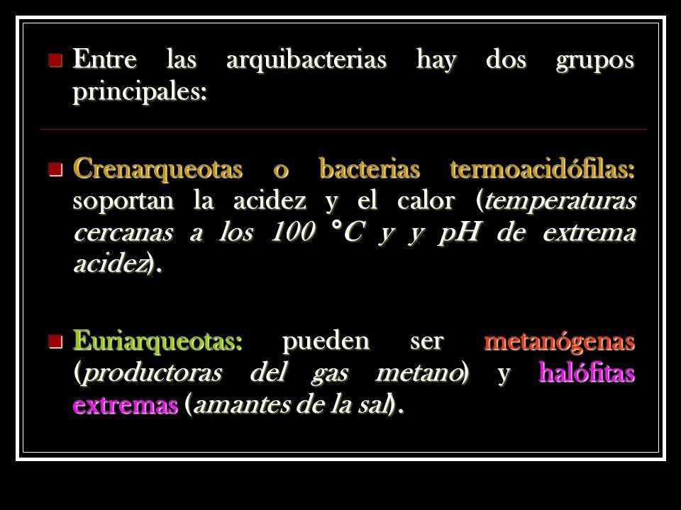 Entre las arquibacterias hay dos grupos principales: Entre las arquibacterias hay dos grupos principales: Crenarqueotas o bacterias termoacidófilas: soportan la acidez y el calor (temperaturas cercanas a los 100 °C y y pH de extrema acidez).