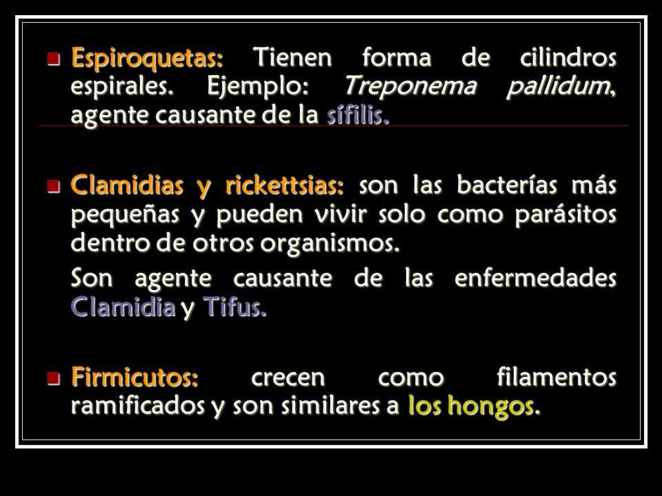 Espiroquetas: Tienen forma de cilindros espirales. Ejemplo: Treponema pallidum, agente causante de la sífilis. Espiroquetas: Tienen forma de cilindros