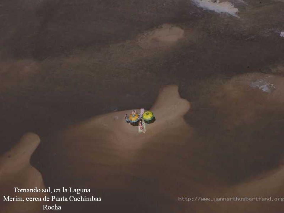 Tomando sol, en la Laguna Merim, cerca de Punta Cachimbas Rocha