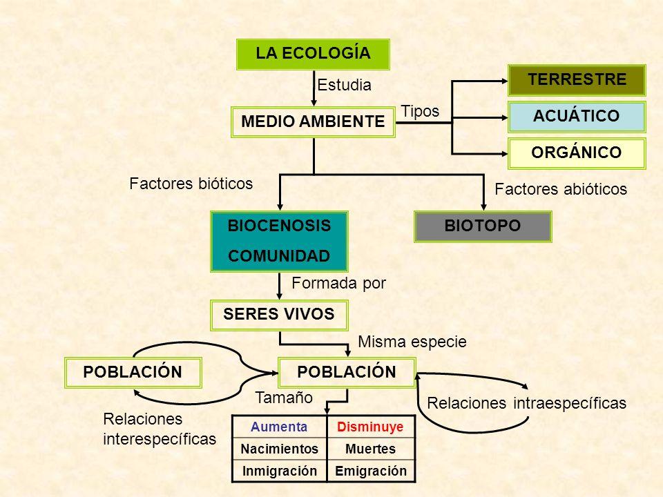 LA ECOLOGÍA MEDIO AMBIENTE Estudia ACUÁTICO TERRESTRE ORGÁNICO Tipos BIOTOPOBIOCENOSIS COMUNIDAD Factores bióticos Factores abióticos SERES VIVOS POBLACIÓN Formada por Misma especie AumentaDisminuye NacimientosMuertes InmigraciónEmigración POBLACIÓN Relaciones intraespecíficas Relaciones interespecíficas Tamaño