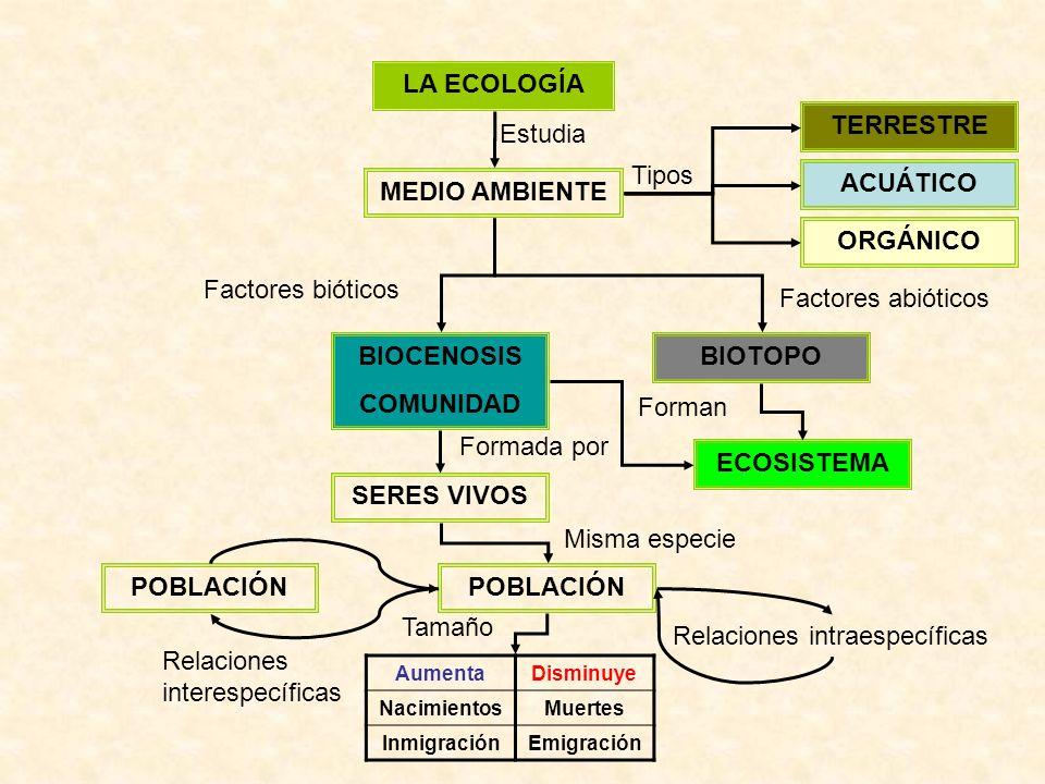 LA ECOLOGÍA MEDIO AMBIENTE Estudia ACUÁTICO TERRESTRE ORGÁNICO Tipos BIOTOPOBIOCENOSIS COMUNIDAD Factores bióticos Factores abióticos SERES VIVOS POBLACIÓN Formada por Misma especie AumentaDisminuye NacimientosMuertes InmigraciónEmigración POBLACIÓN Relaciones intraespecíficas Relaciones interespecíficas ECOSISTEMA Forman Tamaño
