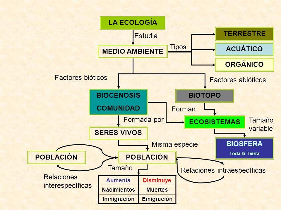 LA ECOLOGÍA MEDIO AMBIENTE Estudia ACUÁTICO TERRESTRE ORGÁNICO Tipos BIOTOPOBIOCENOSIS COMUNIDAD Factores bióticos Factores abióticos SERES VIVOS POBLACIÓN Formada por Misma especie AumentaDisminuye NacimientosMuertes InmigraciónEmigración POBLACIÓN Relaciones intraespecíficas Relaciones interespecíficas ECOSISTEMAS Forman Tamaño BIOSFERA Toda la Tierra Tamaño variable
